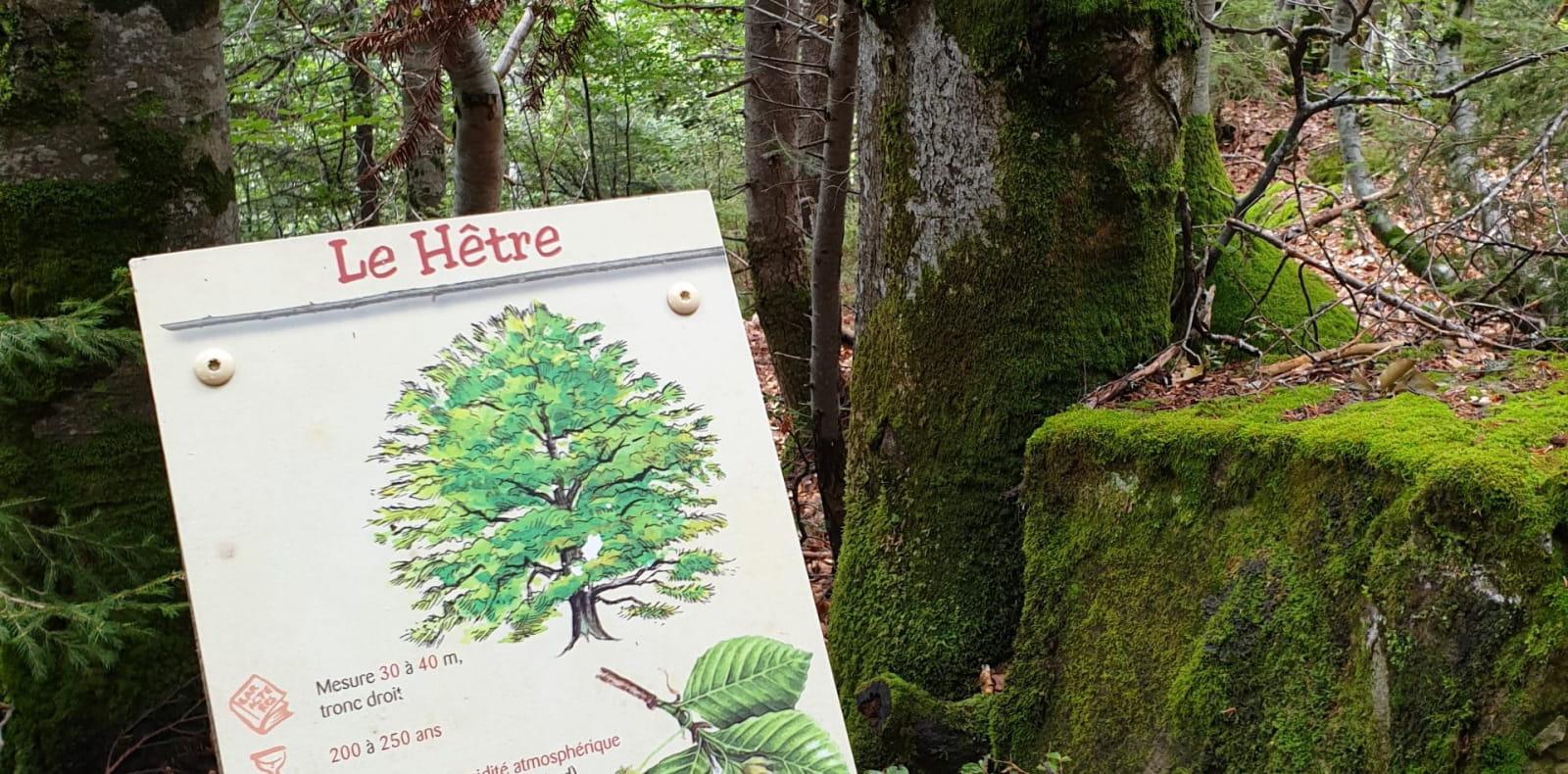 Panneau explicatif arboretum